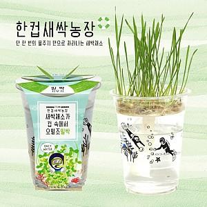한컵새싹농장 밀싹